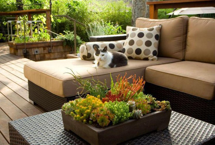Outdoor coffee table decor with succulents