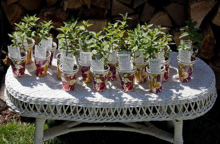 Pretty herb buckets for summer garden party favors 1