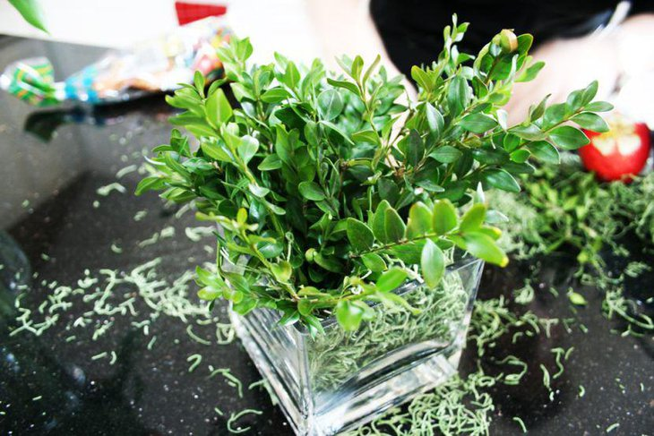 Refreshing buxus and moss spring table centerpiece