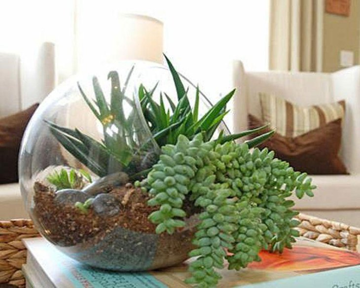 Stunning succulent terrarium centerpiece on coffee table