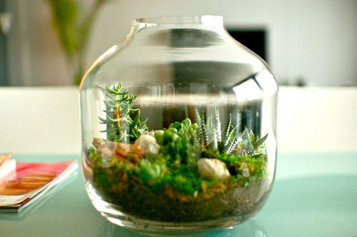 Succulent terrarium centerpiece on coffee table